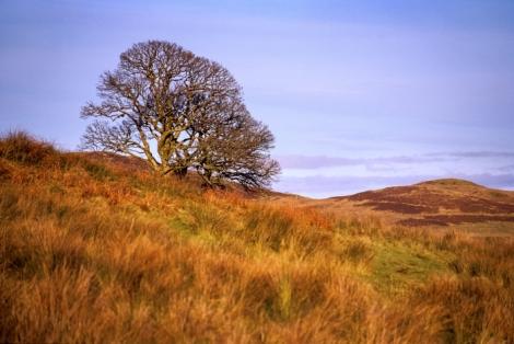 Tree near Dunrod Hill